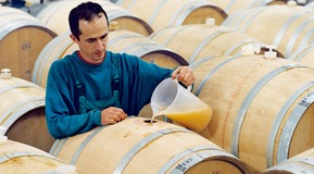 Man filling wine barrel, horizontal reversed use